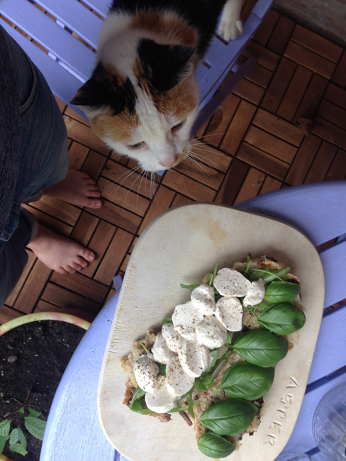 Picture of an open faced mozzarella and basil sandwich on a wooden board against a purplish blue background. Also visible is a potted plant, a chair, and a cat on the chair smelling the sandwich.
