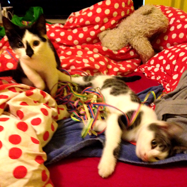 Blurry picture of two kittens playing in bunch of confetti on a red and white polka dotted duvet cover.